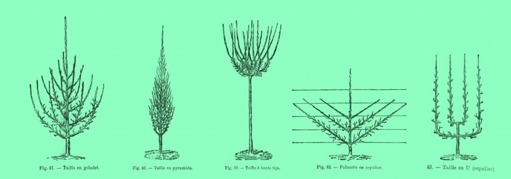 Taille des arbres fruiters de la Chartreuse