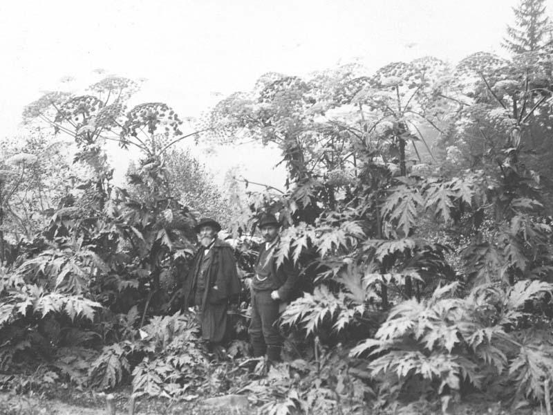Prof. Dr. Schröter de Zürich et M. Pillichody, inspecteur forestier à la Vallée au pied des Berces du Caucase à Pont de Nant au début du XXe siècle.