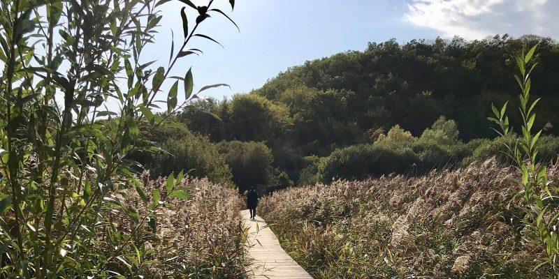 Panoramique sur le sentier à travers le marais d'Andryes et les roseaux.