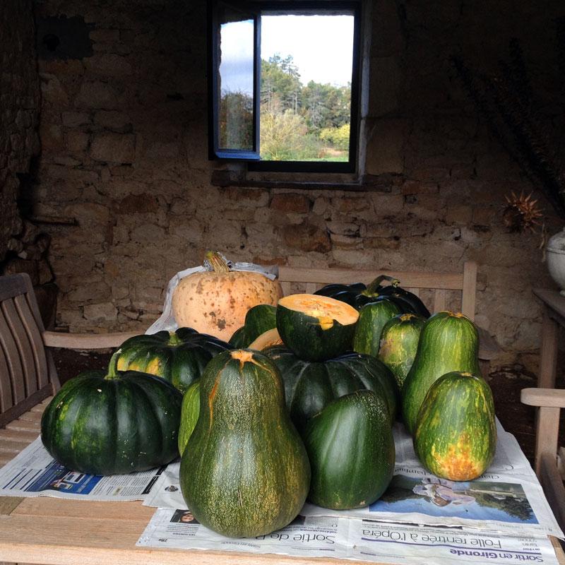 Courge galeuse d'Eysine, Sucrine du Berry, Courge muscade à la Chartreuse de Basseville, automne 2016.