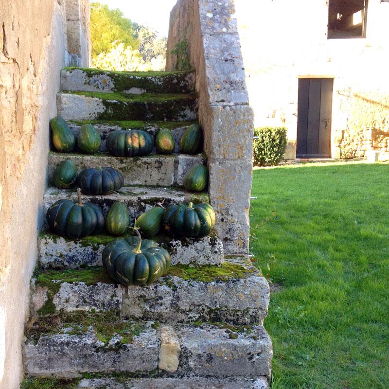 Sucrine du Berry, Courge muscade à la Chartreuse de Basseville, automne 2016.
