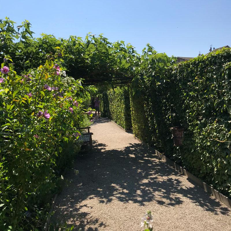 Haies de charmilles et rosier dans le jardin des cinq sens à Yvoire, juillet 2018. Chartreuse de Basseville.