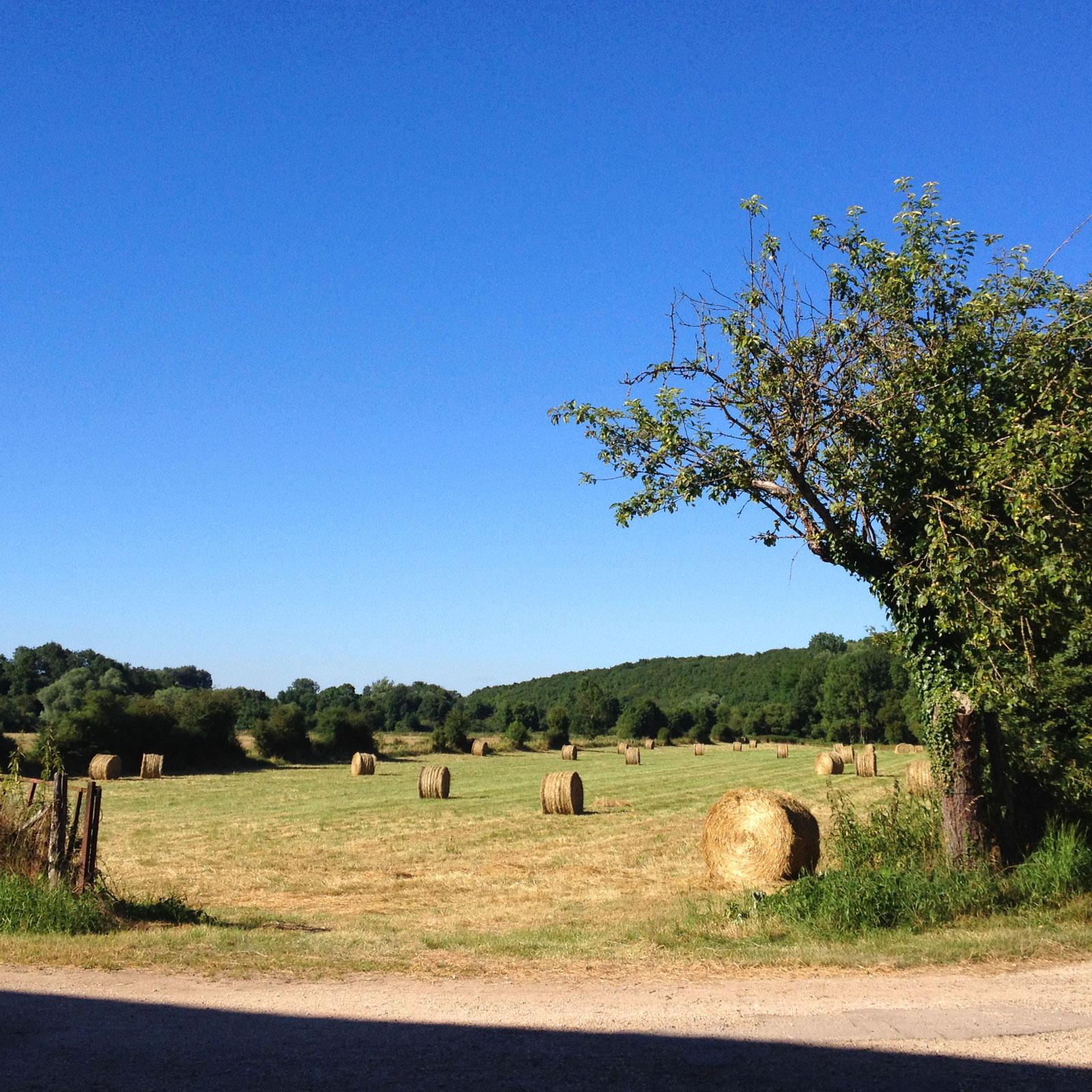 Séchage pour conservation à la Chartreuse de Basseville. Août 2017.