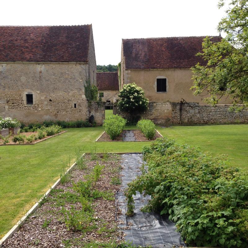 Groseilliers à maquereau et cassissiers du jardin de la Chartreuse de Basseville au mois de juin.