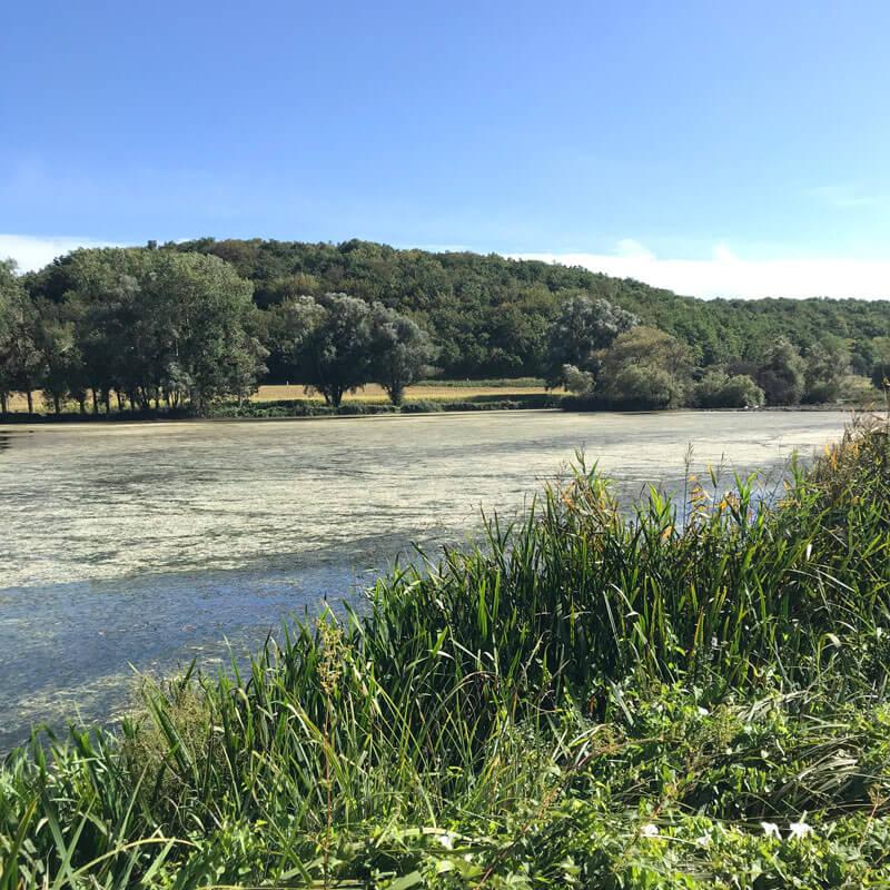 L'étang du marais d'Andryes
