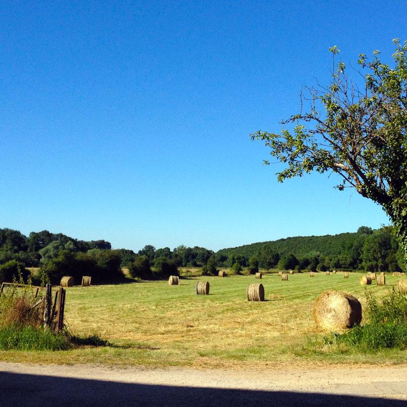 Ballots dans les champs à la Chartreuse de Basseville, Pousseaux. Août 2016