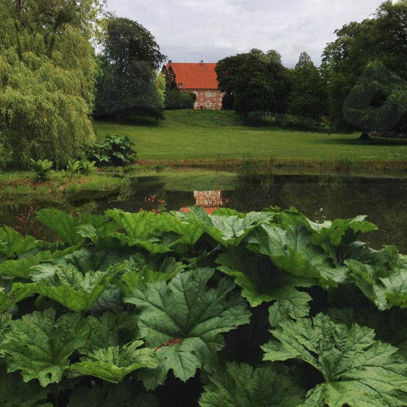 La façade du château et les gunnera du parc à Krapperup, Suède. Chartreuse de Basseville.