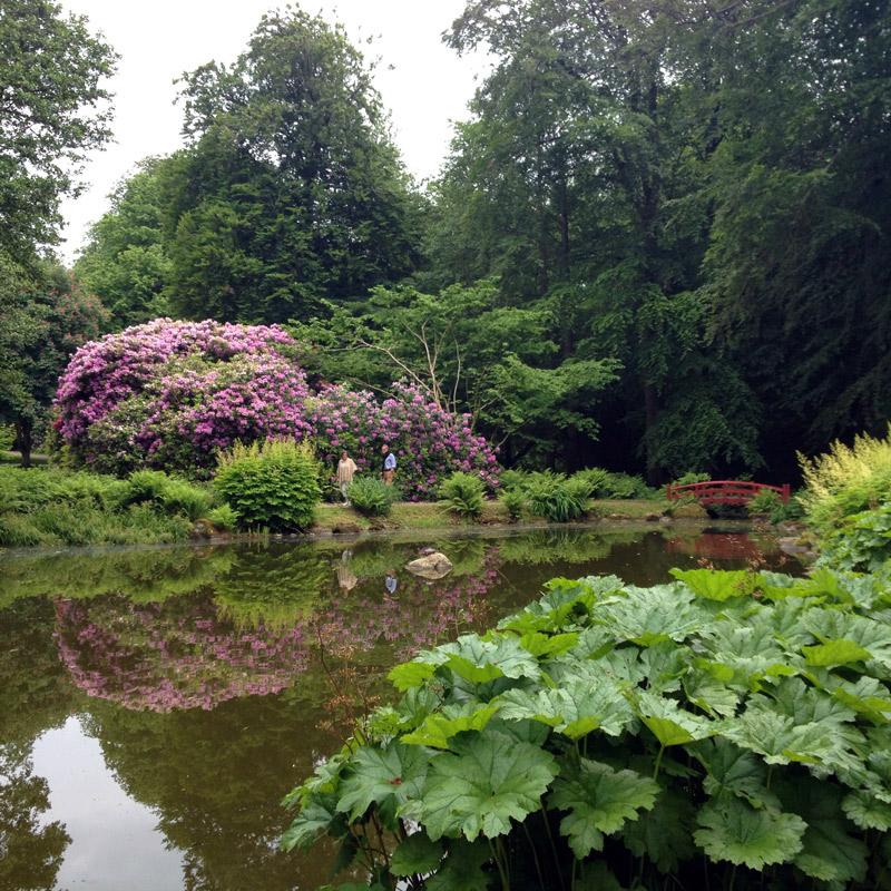 Rhododendrons et gunnera dans le parc du château de Gyllenstierna, à Krapperup, Suède. Chartreuse de Basseville.