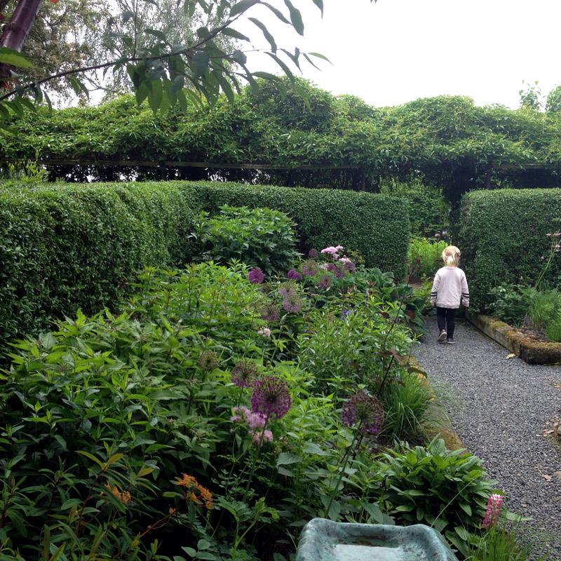 Dans le jardin de Lottie Hermansson au sud de la ville d'Ängelholm en Suède. Chartreuse de Basseville.