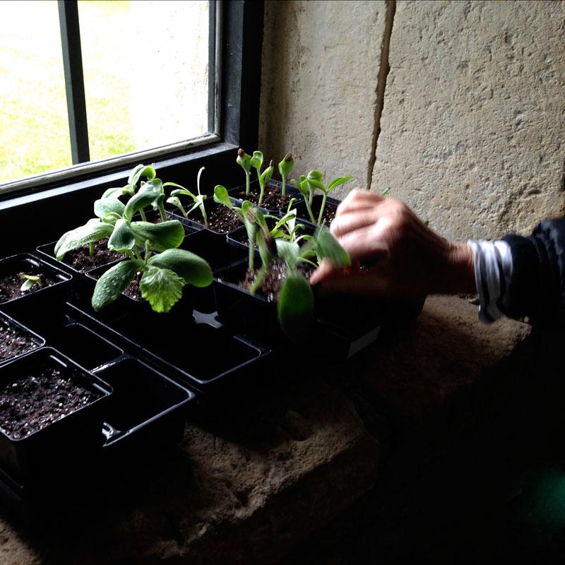 La nursery à la Chartreuse de Basseville, Pousseaux. Printemps 2015.