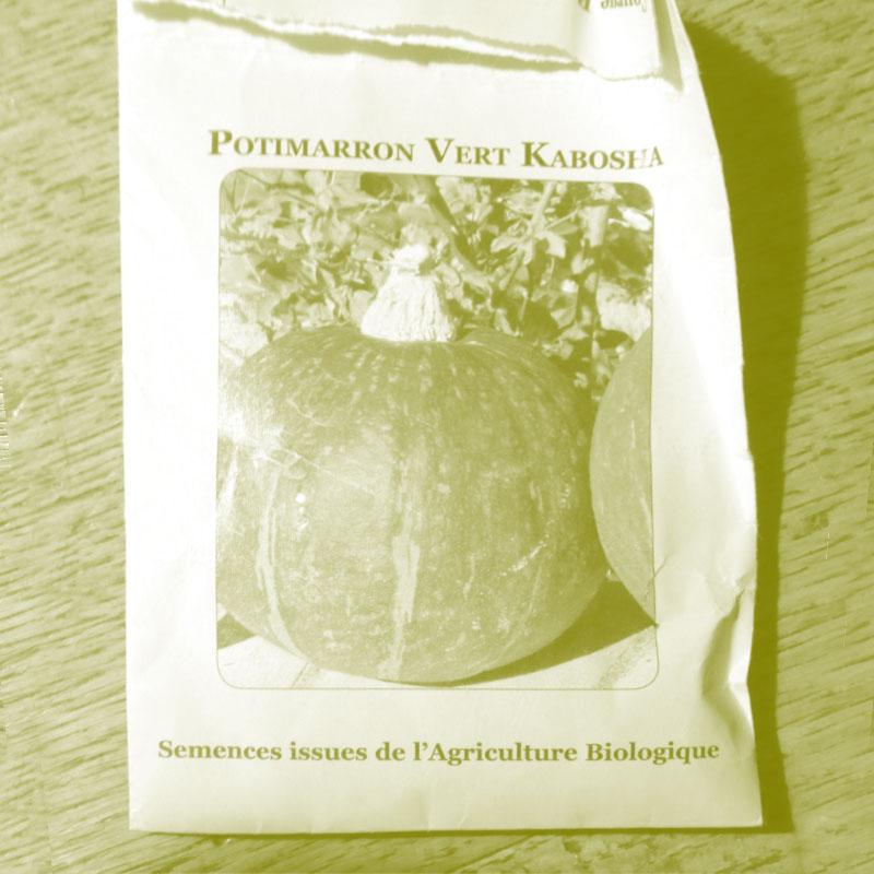 Graines de potimarron vert Kabosha à la Chartreuse de Basseville.