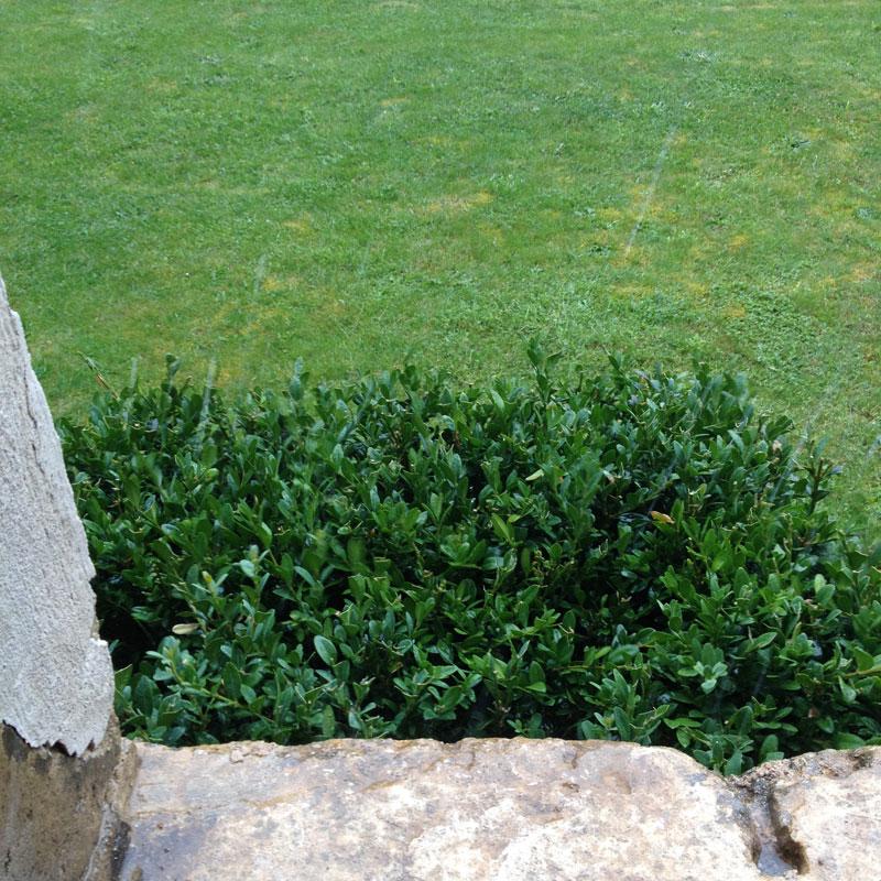 Rendez-vous aux jardins 2017 à la Chartreuse de Basseville. Il pleut.