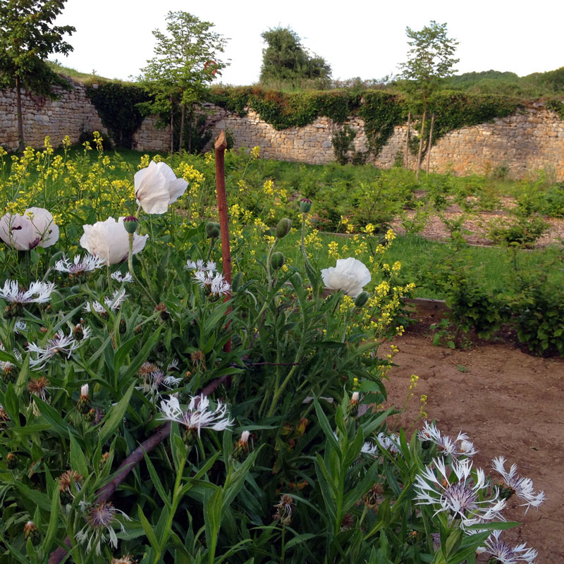Rendez-vous aux jardins 2017 à la Chartreuse de Basseville. Les œillets et pavots au potager.