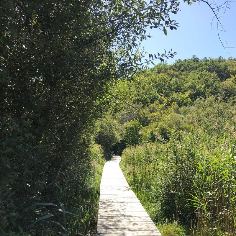 Le sentier dans la roselière du marais d'Andryes